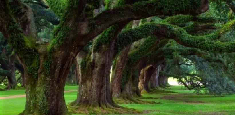 Proyecto de reforestación hawaiano utiliza tecnología RFID para controlar los árboles