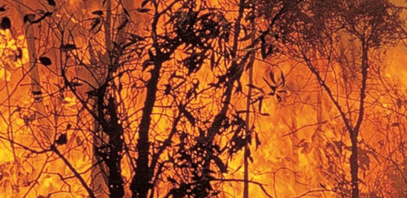 Prueban sistema RFID de ProximaRF para dar respuesta temprana a los incendios forestales