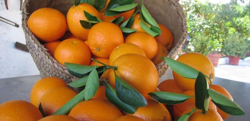 Intermec impulsa sus servicios y productos en trazabilidad alimentaria